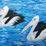 Pelicans of Tangalooma Island
