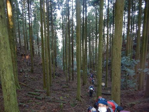 桂木山HP04.jpg