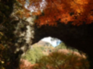小豆島43.jpg