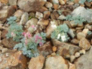 五竜岳HP06.jpg