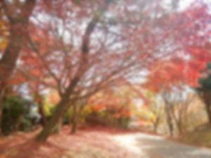 小豆島39.jpg