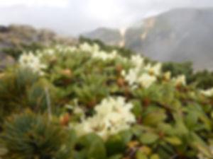 八ヶ岳HP0230.jpg