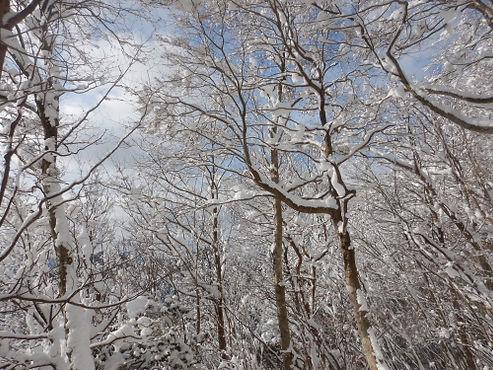 莇ヶ岳HP02.jpg