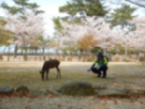 宮島追悼登山20.jpg