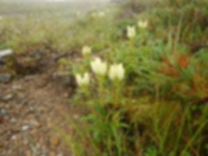 五竜岳HP18.jpg