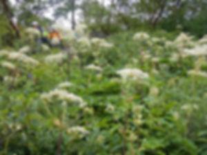 五竜岳HP26.jpg