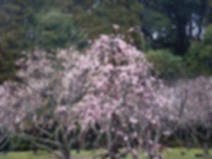 三高山03.jpg