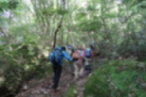 白石山HP06.jpg