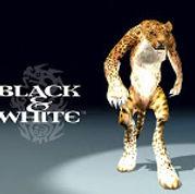 leopard+desk1_640x480.jpg
