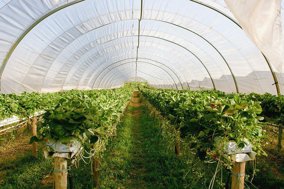 greenhouse-2096497_1280.jpg