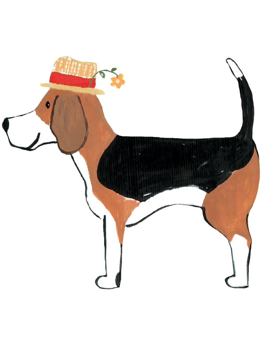 Beagle with Straw Hat