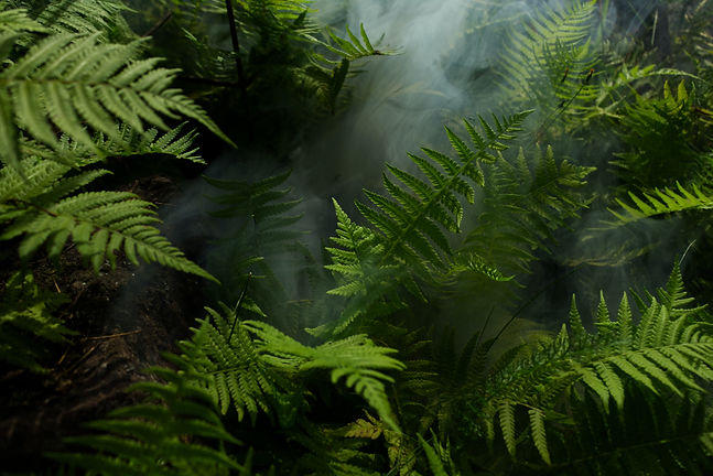 photo-of-fern-plants-2757549.jpg