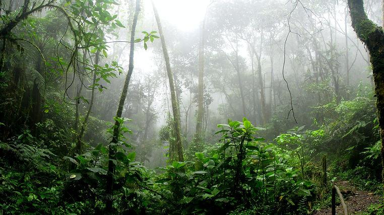 rainforest-during-foggy-day-975771.jpg