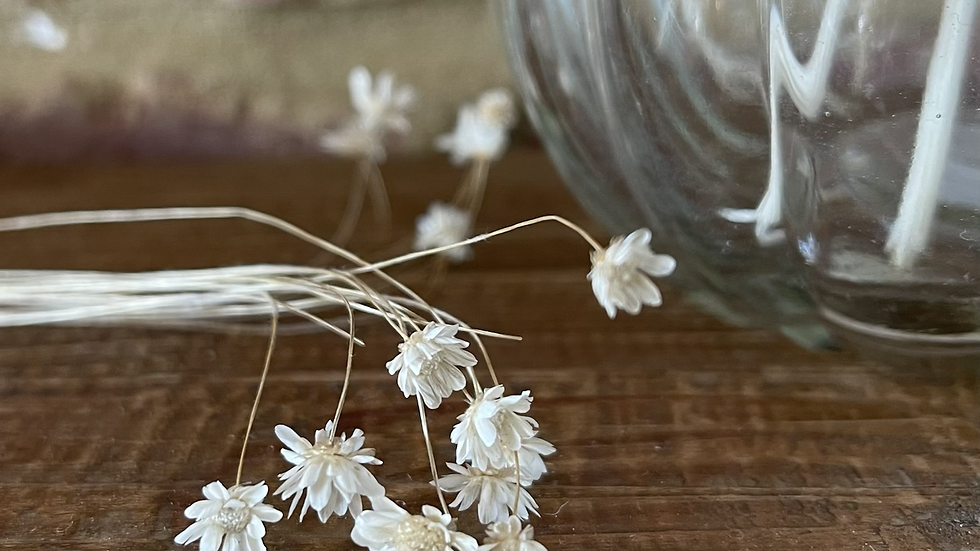 Mini delicate dried white daisy flowers - 30 stems