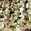 Thumbnail: White Hydrangea Everlasting Wreath