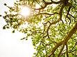 Ray of Light trees planting trees ron barham rachel evangelin barham tupelo tornado