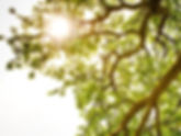 3 Leaf Wellness Centre, Edmonton Massage Therapy