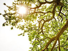 sun shining through a treetop depicting hope through therapy at mckenziecounseling.org