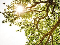 Foto do sol através de uma árvore