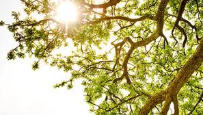 L'arbre de Vision