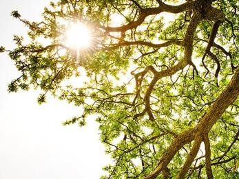 Rays of Light: Islamic Meditation