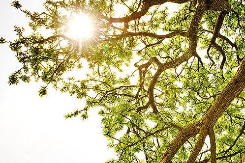 Meditace stromu