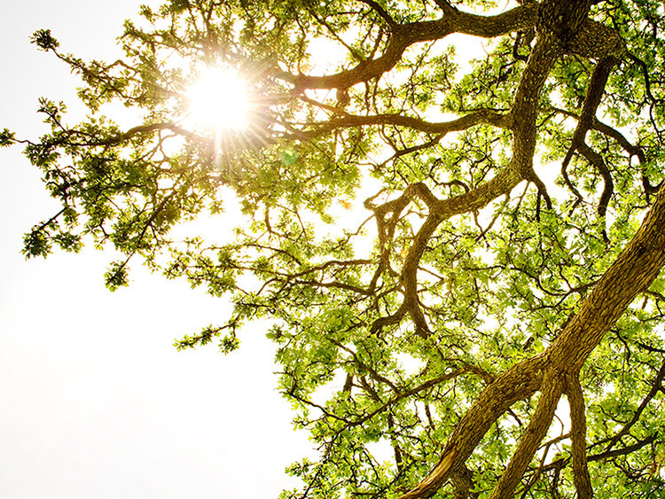 Sunshine and a link between Vitamin D and Your Mood.