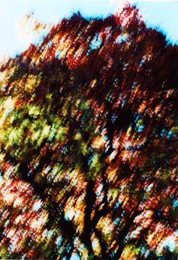 Autumn a Drift.