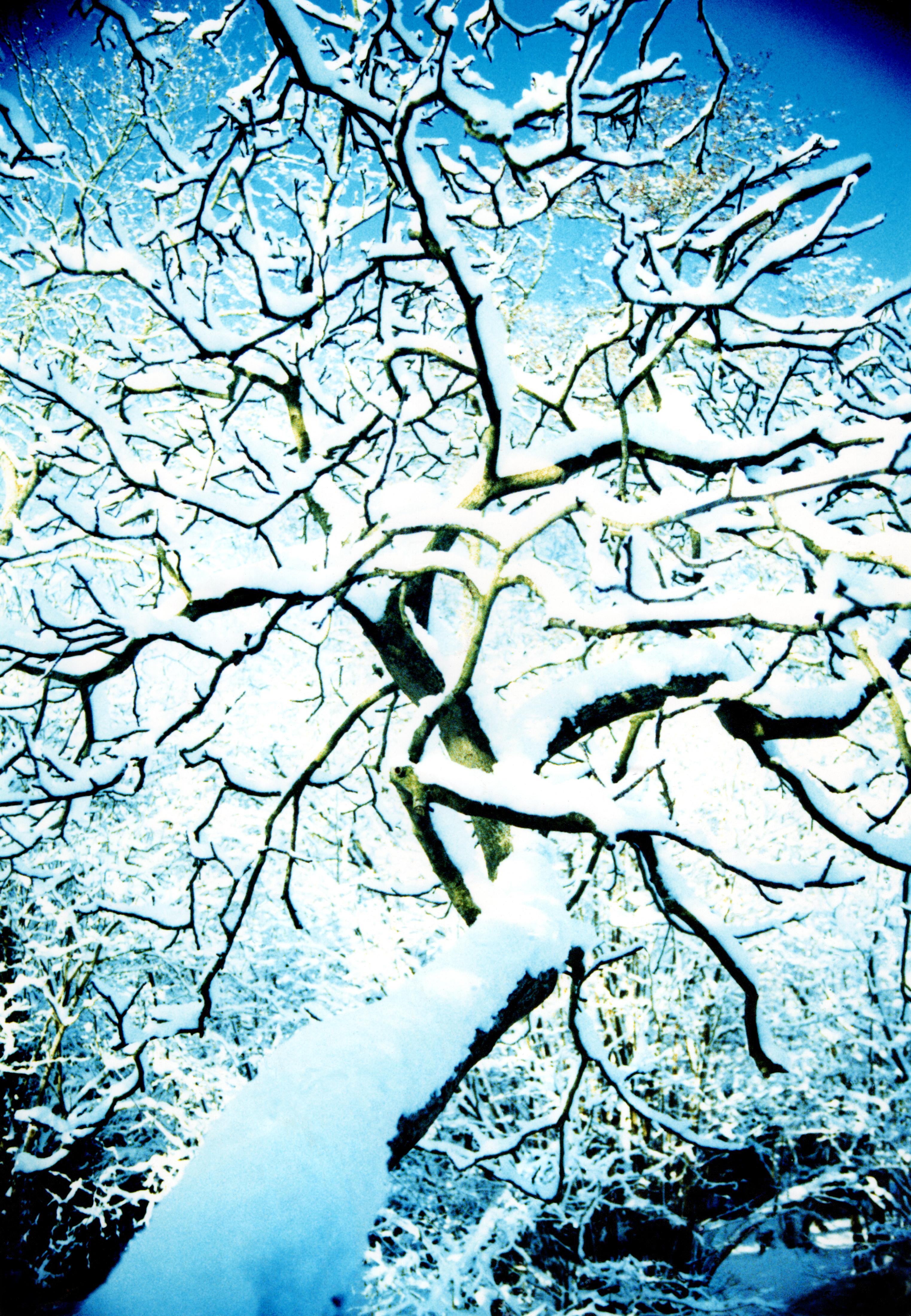 like cracks in the Snow