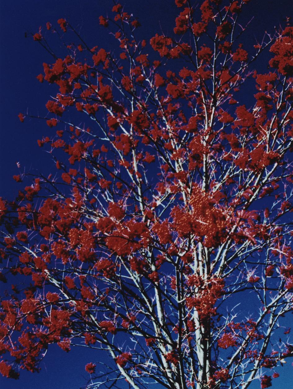 Cold Crimson