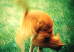 Cat in a Spin.