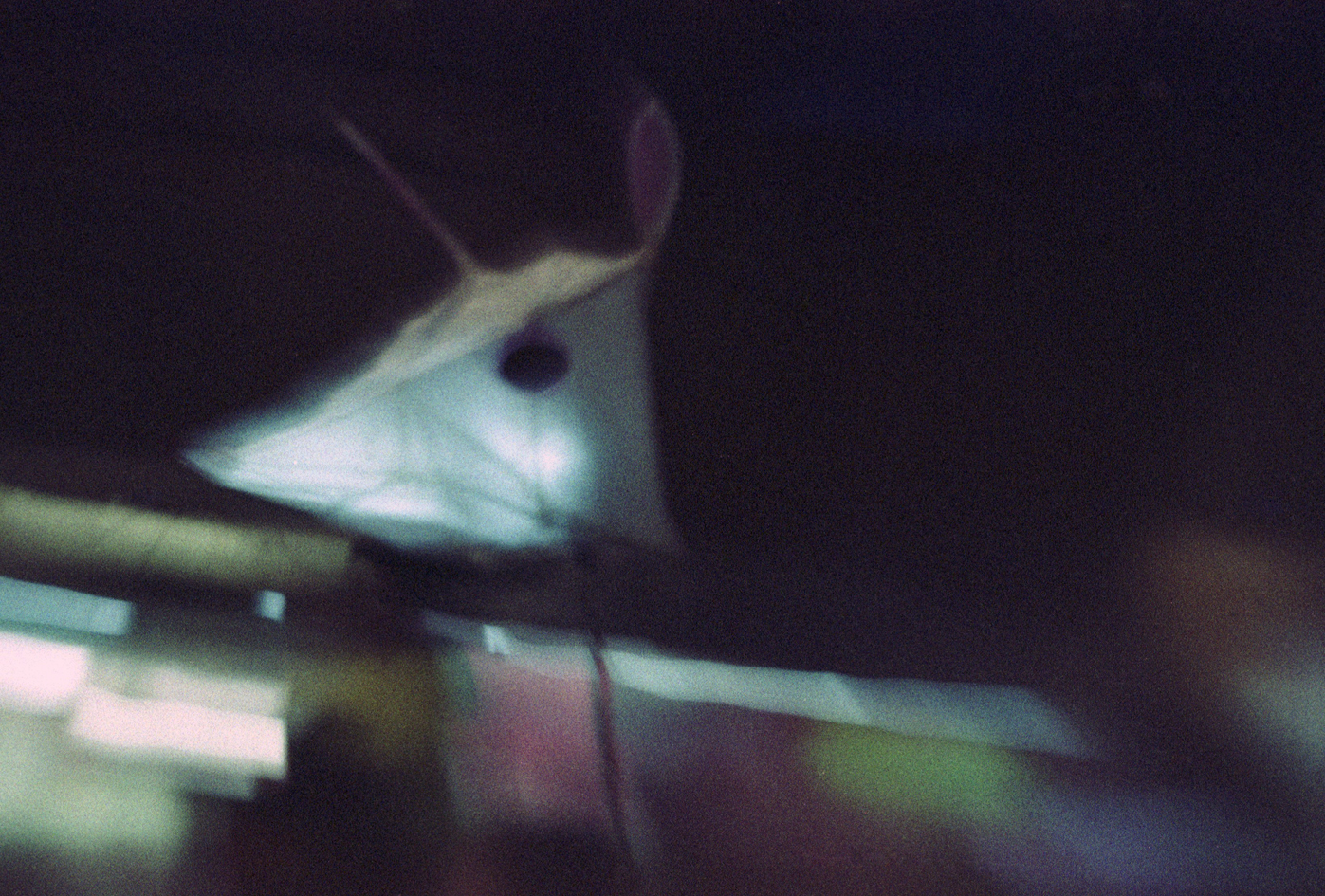 Street Mouse