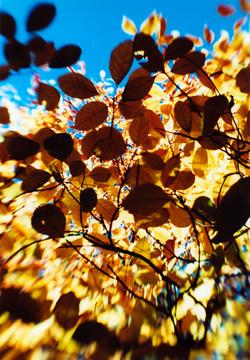 Under Autumn Cover