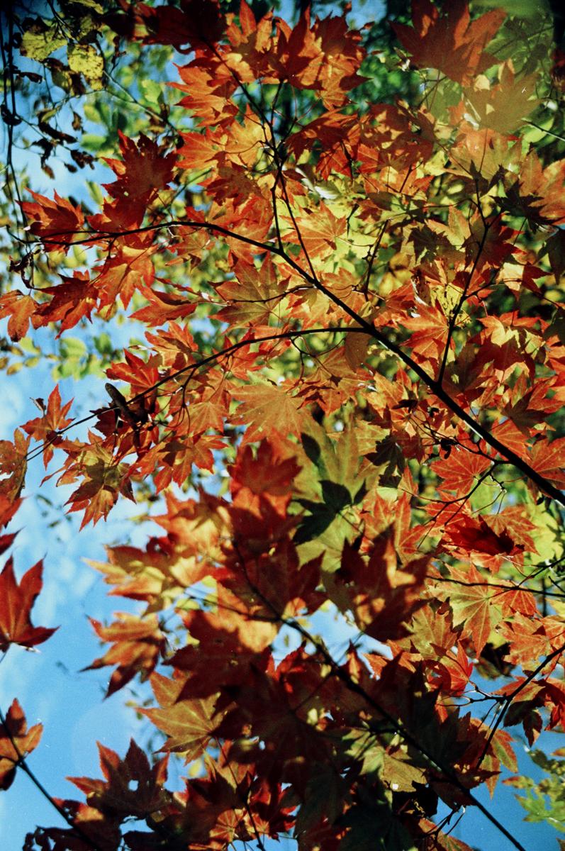 Leafy Colour