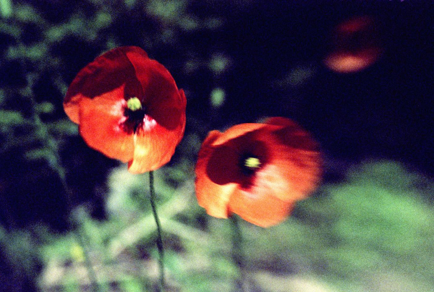 a flower of war.jpg
