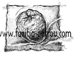 product illustration_001 copy