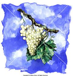 1.blue-grape 3
