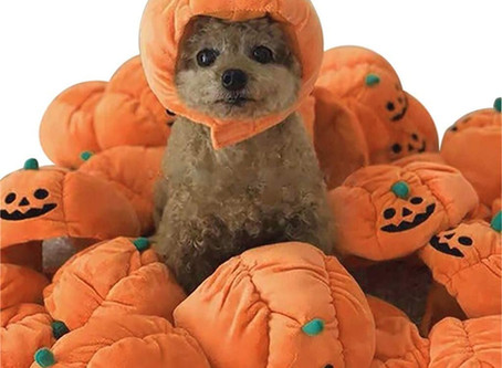 $2.99-Pet Pumpkin Hat