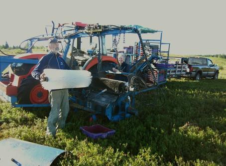 The Quinn's Blueberry Harvester