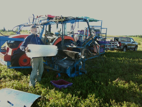 The Quinn's Blueberry Harvester