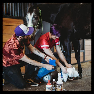 Association of Certified Equine Therapies Certified Equine Care Specialist