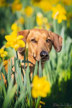 Hundefotografie Blumen