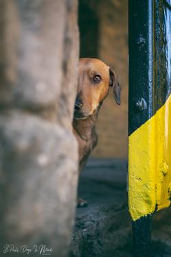 Stadtshooting mit Hund