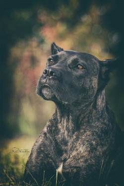 Hundeporträt Fotografie