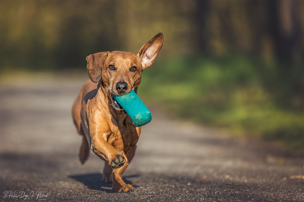 Hundefotografie Coaching