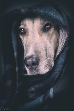 Studiofotografie Hund