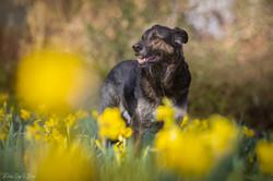 Hunde & Blumen