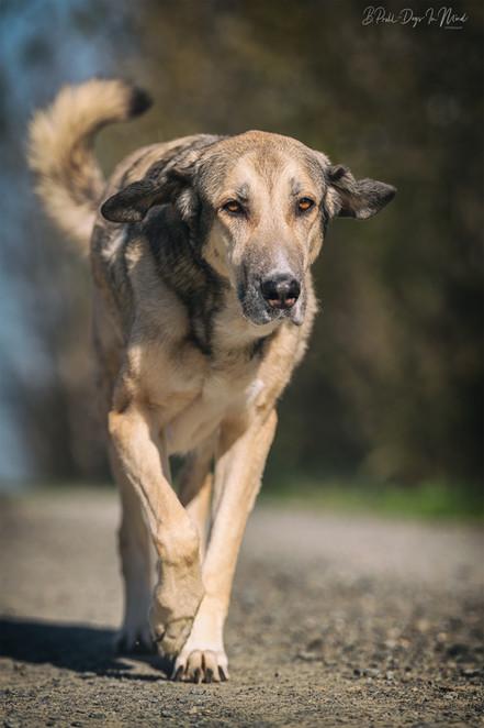 Hundefotografie Einzelcoaching