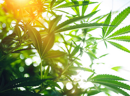 How to start selling CBD Oil products?