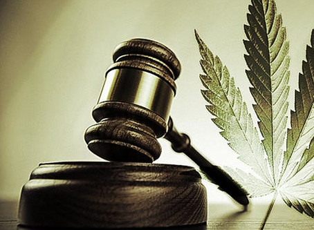 CBD Hemp Oil Laws In South Africa - 5 Things Business Owners and Importers Need to Know